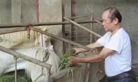 Nhiều nhà có xe hơi, biệt thự từ nghề nuôi ngựa bạch