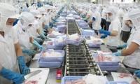 Giá cá tra lên cao nhất trong năm, có khả năng tăng tiếp