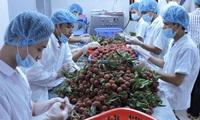 Trái cây Việt chinh phục thị trường khó tính