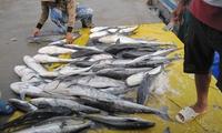 Khánh Hòa: Cá chết hàng loạt, thiệt hại hàng tỷ đồng