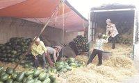 Rau quả Việt có thể tăng xuất khẩu gấp 5, gấp 10