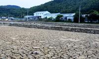 Giá rẻ như cho, diêm dân bỏ hoang ruộng muối Sa Huỳnh