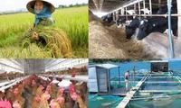 Tiền đổ vào nông nghiệp gấp hơn 2 lần vào bất động sản
