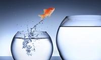 CTCK nhận định thị trường 03/11: Cơ hội tại VN-Index đã mỏng lại đáng kể