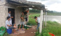 Quảng Ninh: Tôm chết hàng loạt, người nuôi bán vội tôm non