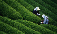 Nông sản Việt: Loay hoay xác định vị thế