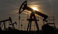 Giá dầu tăng mạnh nhất 7 tháng