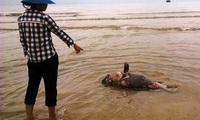 Công điện Chính phủ: Cấm người dân sử dụng, buôn bán hải sản chết bất thường ở miền Trung