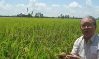 Không công nghệ cao, gạo Campuchia vẫn ngon nhất thế giới