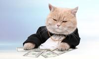 Một quỹ đầu tư lạ của Mỹ định rót 150 triệu USD vào Tập đoàn Tân Tạo