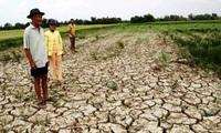 Mỹ viện trợ 500.000 USD cho vùng hạn hán và xâm nhập mặn ở Việt Nam