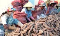 Khó kiểm soát thương lái Trung Quốc mua gom thủy sản