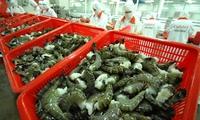 Lo ngại thị trường tôm xuất khẩu