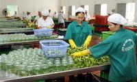 4 nhóm hàng nông sản xuất khẩu chủ lực tăng trưởng 2 con số
