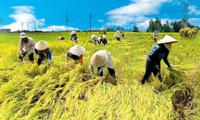 Người Việt ăn gạo ít đi, đóng góp của nông nghiệp trong GDP giảm xuống