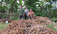 Xuất khẩu nông sản sang Trung Quốc: Tiêu thụ nhiều, nhưng rủi ro