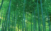 Bamboo Capital lên kế hoạch phát hành riêng lẻ 20 triệu cổ phiếu