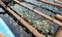 Bắt giữ 80.000 con hàu giống nhập lậu từ Trung Quốc