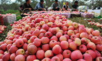 Hàng nghìn mặt hàng sẽ vào Việt Nam với thuế 0% nhờ ACFTA