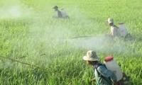 50% số lượng thuốc trừ sâu nhập về Việt Nam là từ Trung Quốc