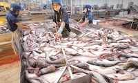 Vĩnh Hoàn: Sản lượng xuất khẩu tháng 8 đạt mức kỷ lục mới