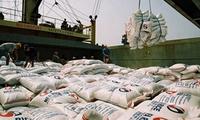 Đẩy mạnh thu mua, tiêu thụ lúa gạo hàng hóa