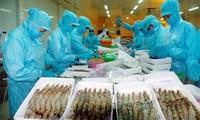 Xuất khẩu tôm sang Hàn Quốc giảm mạnh