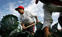 Venezuela buộc dân làm nông dân để chống đói