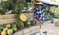 Sốt mít Thái 'siêu sớm', giá cao gấp gần 10 lần bình thường