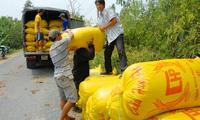 Giá lúa ĐBSCL tăng, nông dân 'dễ thở'