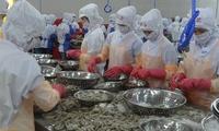 Xuất khẩu tôm lại vấp phải trở ngại lớn ở thị trường Hàn Quốc