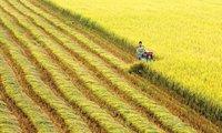 Nhìn từ chuyện người nông dân ly nông và người nông dân ở lại