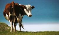 """[Infographic] Hiểu về 8 mô hình kinh doanh thông qua câu chuyện """"con bò và hộp sữa"""""""