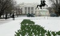 """Kẻ đột nhập Nhà Trắng """"nhởn nhơ"""" 15 phút trước khi bị bắt"""