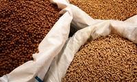 Dừng nhập khẩu thức ăn chăn nuôi có chứa kháng sinh kích thích sinh trưởng