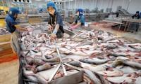 Tập đoàn Carrefour ngừng mua cá tra Việt Nam