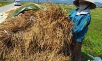 """Hà Tĩnh: Mất mùa nặng nề, 40 vạn dân có nguy cơ """"treo niêu"""""""