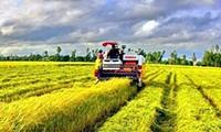 Đột phá phát triển nông nghiệp tạo trụ đỡ cho nền kinh tế