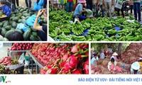 """Vì sao hoa quả Việt thất thế trước """"cơn lốc"""" hàng nhập ngoại?"""