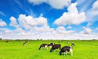 Chi đậm cho quảng cáo, Vinamilk đang nắm giữ 54,5% thị phần sữa nước