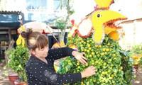 Hoa Tết đồng bằng sông Cửu Long: Được giá vẫn không vui