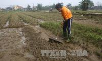 Thừa Thiên - Huế lo khan hiếm hoa và rau xanh dịp Tết