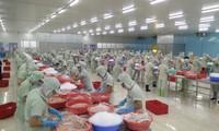 Giá cá tra biến động nhanh hơn cả vàng, USD