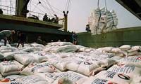 Quản gạo xuất khẩu thế nào?