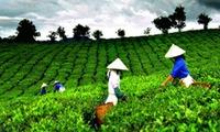 GDP thành phố Hà Nội năm 2014 tăng 8,8% so với cùng kỳ năm trước