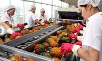 Tiềm ẩn rủi ro, xuất khẩu rau quả vào Trung Quốc vẫn tăng