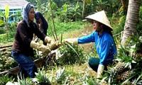 Khó tìm thương hiệu nông sản xuất khẩu