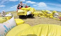 2,78 tỉ USD: xuất gạo bằng với nhập thức ăn chăn nuôi