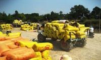 Nghèo trên cánh đồng vàng: Khổ vì lúa chất lượng cao