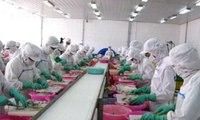 Thiếu nguyên liệu phục vụ các nhà máy chế biến hải sản
